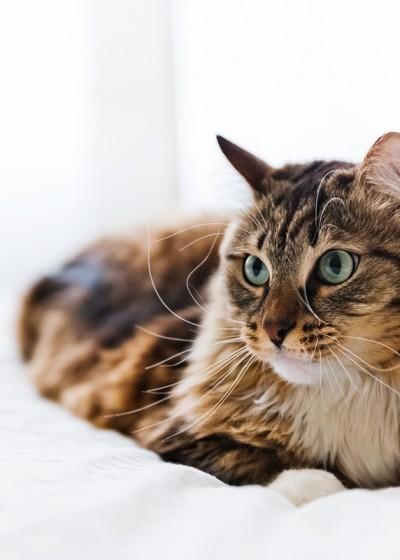 Feline Practice - Online